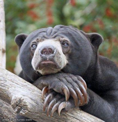 Photo credit: All bears