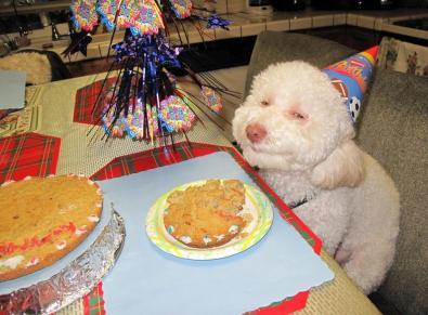 smug-dog-birthday-hat-cake-12677453981